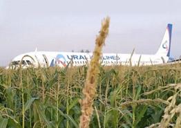 Чудо на кукурузном поле и еще семь подвигов пилотов