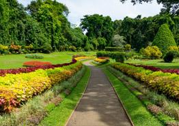 Как отдохнуть на Шри-Ланке бесплатно, если вы – турагент?