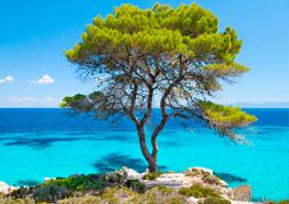 Греция-2019: какие отели 4* выбрать на полуострове Халкидики?