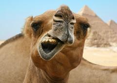 Закрытый Египет перекосит рынок?