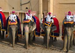Пять туроператоров по Индии, чьи туры оказались самыми востребованными