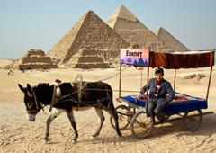 В Египет через соседей: теперь из Ташкента