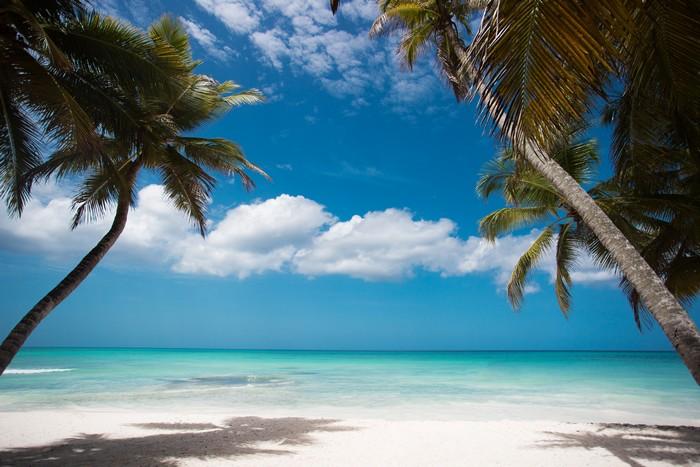 Пальмы пляж.jpg